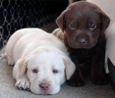 Sweet babies #PUPPIES