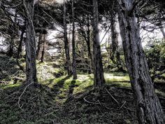 Forest at Land's End