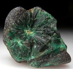 """Radial groups of Emerald crystals in black schist matrix. Unusual formation of crystals that is different than trapiche formations and unlike any other Emerald specimen I have seen before. Another radial group on the backside too."""