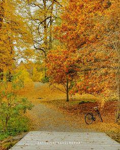 Autumn Pictures, Instagram Accounts, Repeat, Button, Website, Travel, Fall Pictures, Viajes, Destinations