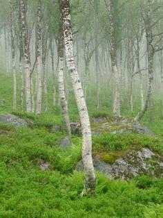 David Ward, Norwegian wood | Into The Light