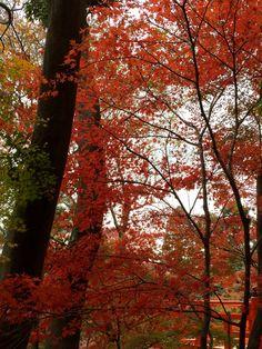 Kyoto kitano-tenmangu