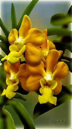 Delight yourself with the images in this gallery, the finest orchid prints you have ever seen.
