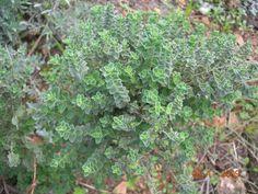 Greek Flowers, Tree Forest, Flowering Trees, Herbs, Landscape, Fruit, Plants, Forests, The Secret
