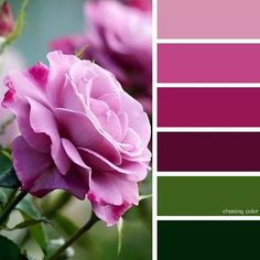 Shades Of Pink Roses (Photo Credit • plus.google.com) #chasingcolor #colorthemes #colorful #color #palette #colorpalette #shades #tones #hues #colorinspiration #inspiration #creative #art #photography #design #theme #nature #flowers #floral #roses #pink #red #pinkroses