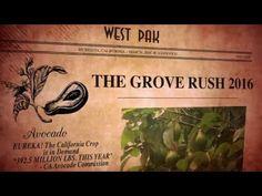 It's California Avocado Season! Will you join the Grove Rush 2016 with West Pak Avocado?