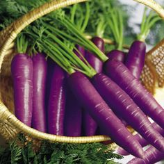 Purple Carrots ~~ Many people are unfamiliar to the purple carrot; its roots date back years ago in the area now known as Afghanistan. Although the purple carrot may be the precursor in the carrot world, it is still widely undervalued. Bright Purple, Purple Haze, Green And Purple, Magenta, Fruit And Veg, Fruits And Veggies, Purple Vegetables, Purple Food, Carrot Seeds