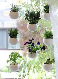 窓さえあれば家庭菜園はできる!吸盤でぺたっと貼れるプランター「Window Pods」