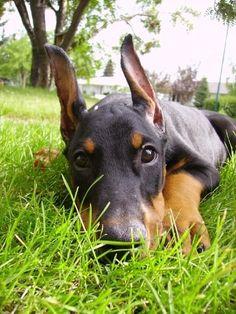 Awwww. I love his/her  ears so cute!