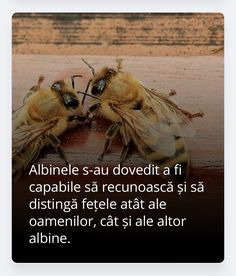 Insects, Bee, Bees, Bugs