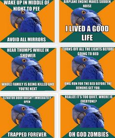 Haha! All of these are hilarious!! Paranoid Parrot!
