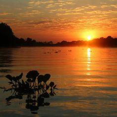 Sesc Pantanal | Rio Cuiabá | Foto do Leonardo Barçante (@leobhmgbr: #alvorada #rioCuiaba #pantanal #mt #pocone #river #sunrise #nature #nofilter #MyTravelGram #travelingram)#travelingram - @leobhmgbr- #webstagram