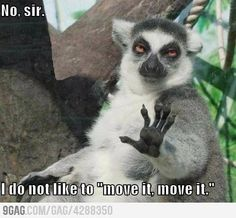 King Julien in real life