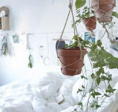 Plante suspendue pour chambre bohème