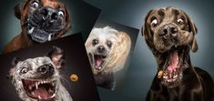 In This Moment, Dogs, Animals, Animales, Animaux, Pet Dogs, Doggies, Animal, Dog