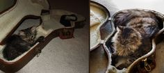 33 Adorable Before & After Photos Of Kittens Growing Up
