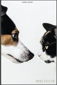 Dog VS Cat Journal Writing: Writing Diary 160 page 6x9 li... https://www.amazon.com/dp/1542940362/ref=cm_sw_r_pi_dp_x_OMxQybBTNDFSS