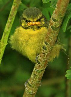 looks like an angry bird...
