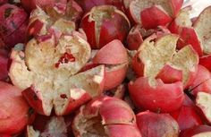 You should not thrown away pomegranate peels ever again. Instead of throwing it, dry it and keep it in your household. Pomegranate peel is extraordinary tool which will help you get rid of any kind of stomach infections. It will also help you when it. Natural Health Remedies, Natural Cures, Natural Healing, Herbal Remedies, Health And Nutrition, Health Tips, Health And Wellness, Health Facts, Natural Medicine