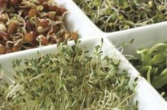This is a guide about growing sprouts. Growing your own sprouts at home can be fun and will ensure that you always have fresh sprouts on hand. Growing Sprouts, Growing Vegetables, Sprouting Seeds, Sprouting Grains, Alfalfa Sprouts, Bean Sprouts, Cancer Fighting Foods, Alkaline Foods, Raw Food Recipes
