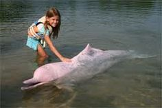 Dauphin Rose, The Good Place, World, Comme, Roses, Travel, Riding Habit, Dolphins, Viajes