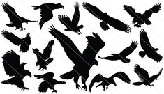 Royalty free silhouette vector images, silhouette graphics, clipart, illustrations and high resolution stock images. Find the silhouette vectors you want! Duck Silhouette, Eagle Silhouette, Silhouette Clip Art, Vector Design, Vector Art, Vector Stock, Bird Outline, Landscape Silhouette, Eagle Vector