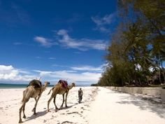 Mombasa, Kenya: Rode my first camel here