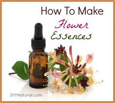 Learn how to make flower essences, how to use them, and what to use them for. We explain it in depth and present a few good ideas to get you started!