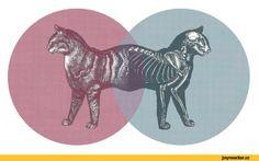 кот шредингера - Поиск в Google