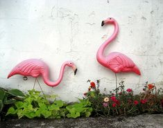 Flamingos + Wall + Flowers