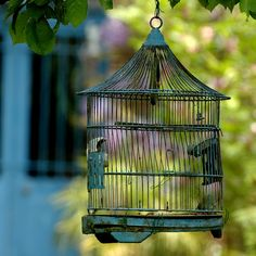 if i was a bird that would be a dream house.  I don't think so. Birds want to be free to fly!!