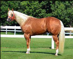 Welcome to Ellis Quarter Horses!