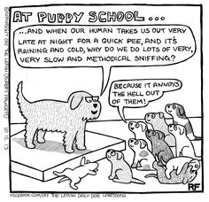 A Day At Puppy School..... ~  Off The Leash  (FB)