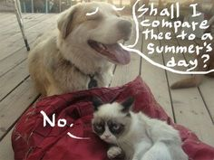 """no"", Grumpy Cat vs Shakespeare"