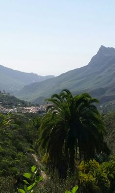 Im Tal der 1000 Palmen  Gran canaria