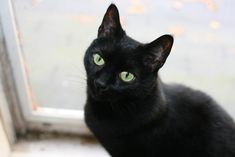 """Love this black cat. I'd name this one, """"Jinx"""""""