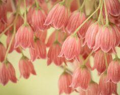 Pink Flower Photography Print Floral Art por RockyTopPrintShop