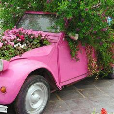 Recycle your old car with Cyclamens