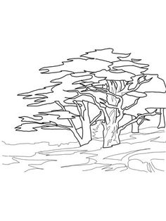 Cedar Trees coloring page from Cedar tree category. Select from 25652 printable crafts of cartoons, nature, animals, Bible and many more.