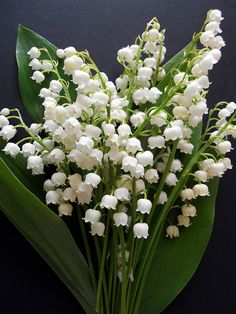 Lily of the valley/Convallaria majalis by malinybi, via Flickr