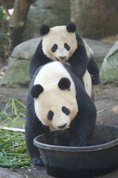 Bai Yun in Mr. Wu's tub Part 1 | Flickr - Photo Sharing!