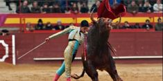 petition: Don't Expose Children to the Violence of Bullfighting