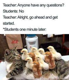 The even more natural progression: 25 Pictures People Who Aren't Teachers Will Never, Ever Understand
