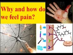 Science Journal proudly presents a animated video to answer many question on pian. Why do have pain? How pain woks? How pain is produced? Find all the answers.