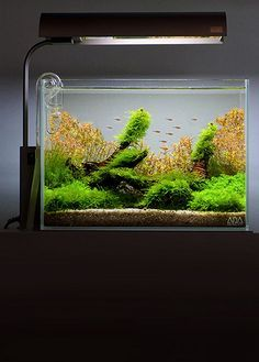 Moderne Techniken Aquarium Dekoration Dekoration Girls Only Sort - Aquaristik