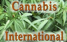 Cannabis International Foundation: A Resource For The Dietary And Medicinal Study And Use Of Cannabis