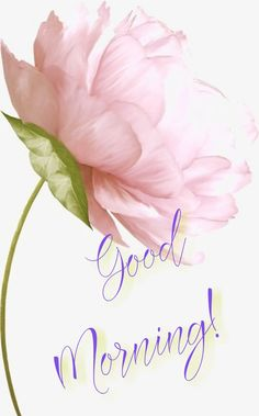Good Morning Roses, Good Morning Picture, Morning Flowers, Morning Pictures, Morning Wish, Good Morning Images, Good Morning Messages, Morning Quotes, Happy Weekend Quotes