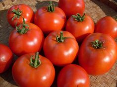 Tomato, Early Willamette - 55-60 days, Det. Bred for Oregon Weather!