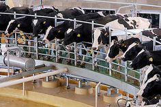 Administración Federal de Ingresos Públicos - IMPUESTOS Resolución General 3858 Impuesto al Valor Agregado. Ley según texto ordenado en 1997 y sus modificaciones. Comercialización de leche fluida sin procesar de ganado bovino. Régimen de retención. R