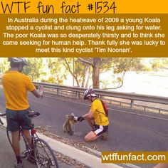 thirsty Koala stops an Australian cyclist. wtf fun facts